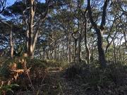 12th Apr 2019 - Twisted coastal forest