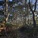 Twisted coastal forest