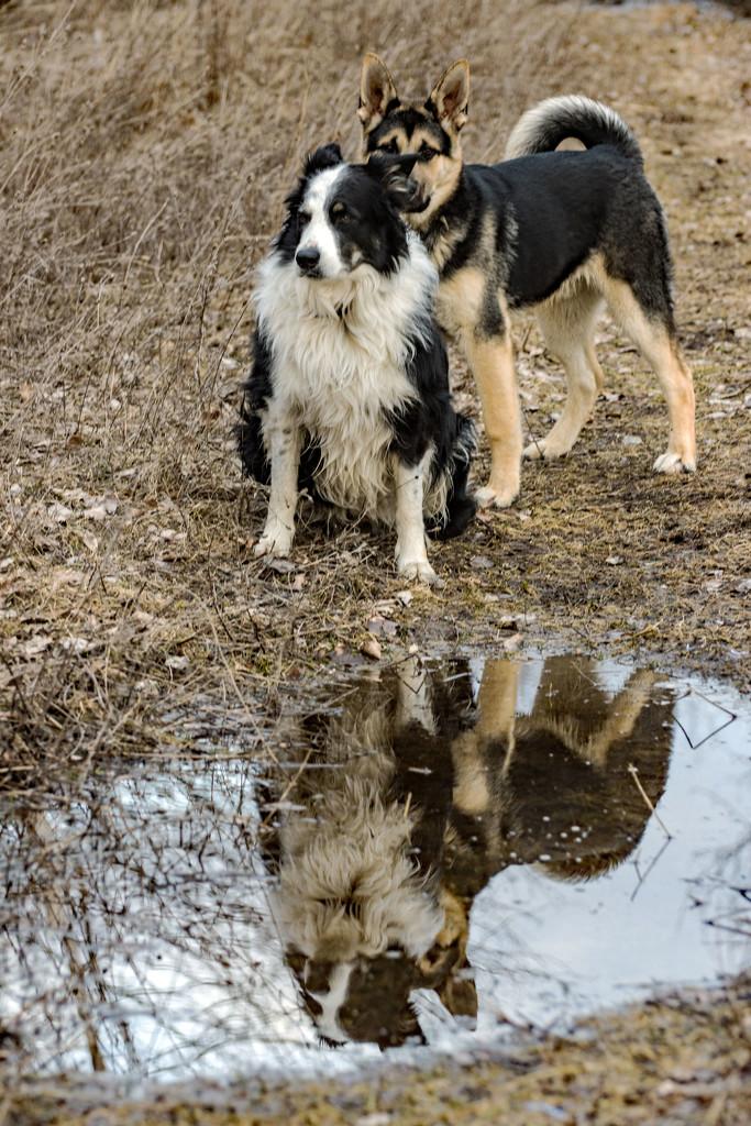 Reflecting Friendship by farmreporter