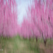 Blossom Blur