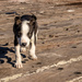 Harbour Pup