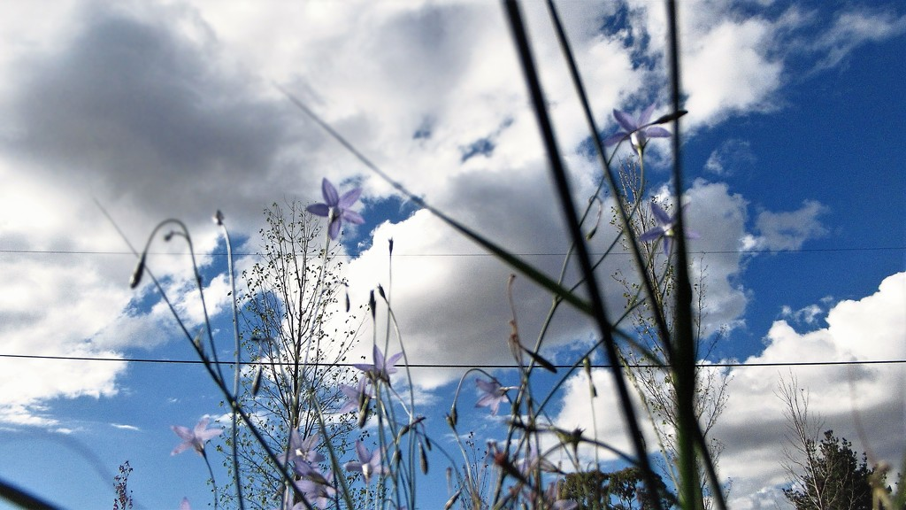 Grass, Bluebell, wires and clouds. by robz