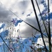 Grass, Bluebell, wires and clouds.