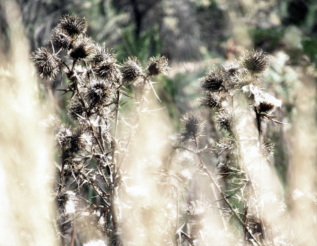 Grass and weeds.. by robz