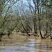 Fulfer Creek
