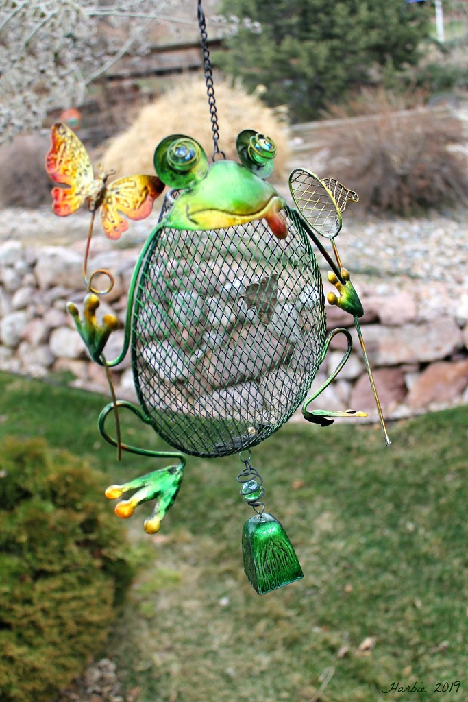 A Frog Birdfeeder? by harbie