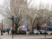 5th Apr 2019 - Flowering trees