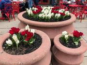 7th Apr 2019 - Findlay Market