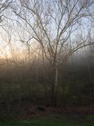 9th Apr 2019 - Foggy morning
