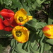 "Thumbnail from the video: ""Flowers in the garden, mid-April 2019"""