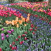 Swirling Tide of Tulips by redy4et