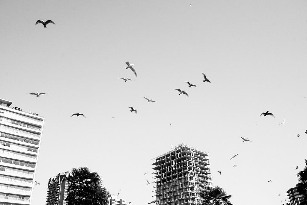 Birds in flight = joy by cristinaledesma33