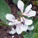 ....in my garden