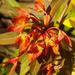 320 Garden beauty