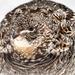 Our Pet Partridge