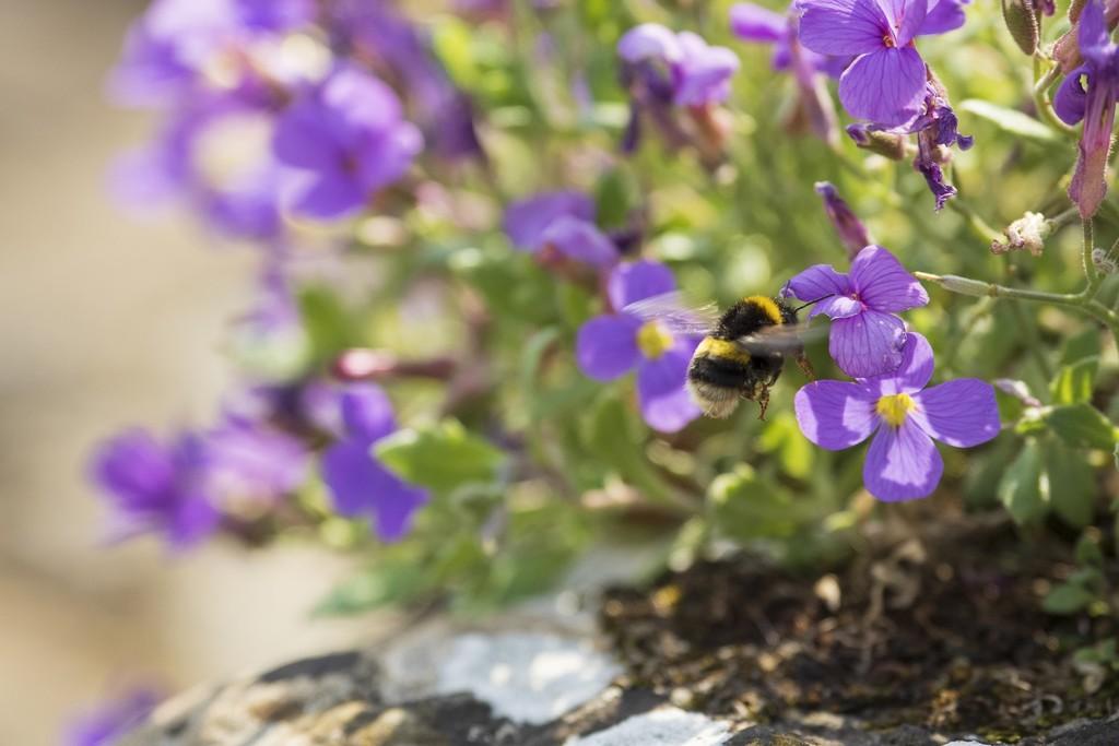 Busy bee! by bizziebeeme