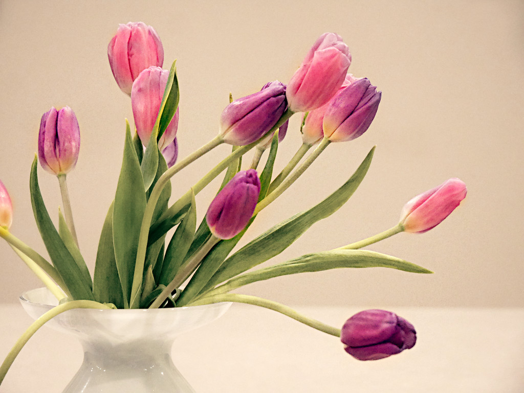 Vase of Tulips by gq