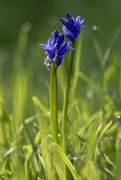 15th Apr 2019 - bluebells