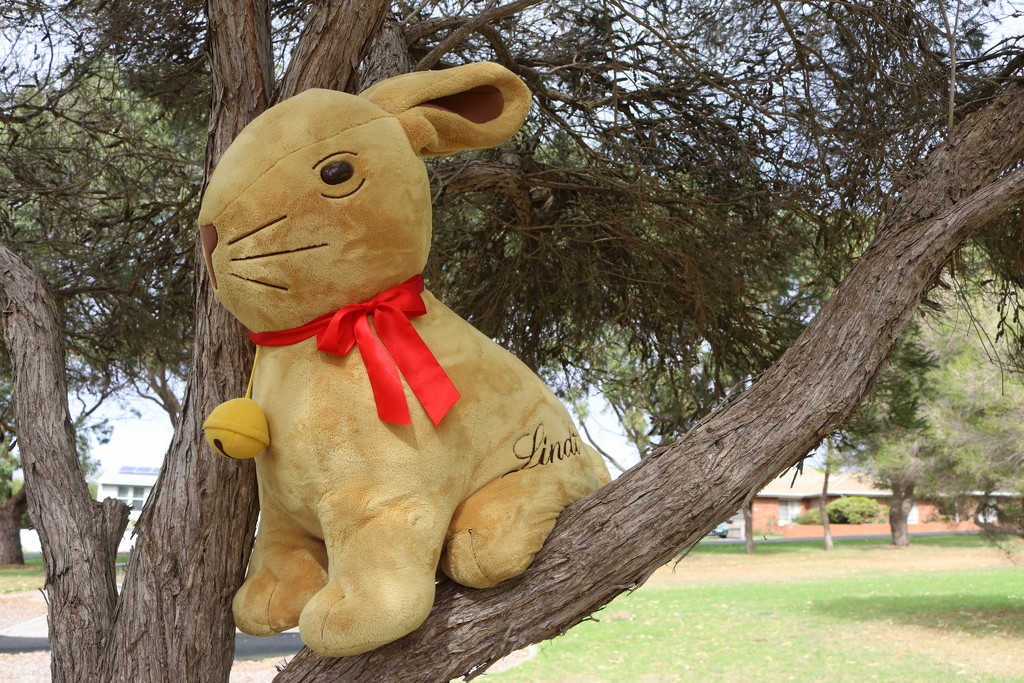 meet Larry Lindt by gilbertwood