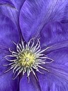 15th Apr 2019 - Purple Beauty