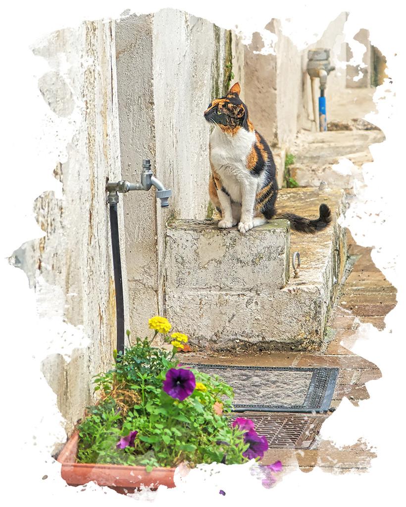Waiting Hopefully  by gardencat