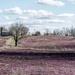 Purple Fields in Kentucky
