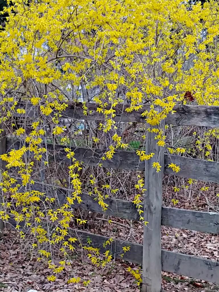 Adding Some Springtime Color  by jo38