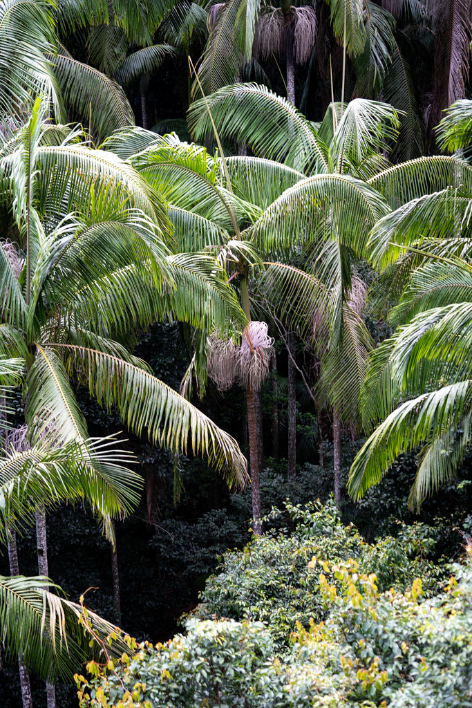Tall ferns by sugarmuser