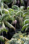 16th Apr 2019 - Tall ferns