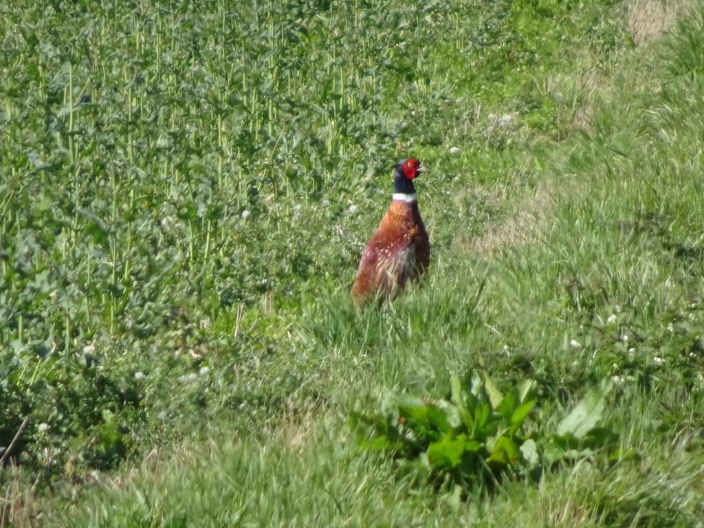 He kept on walking away from me !  by beryl