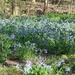 Ahh!  I love Spring!!