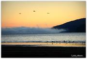 16th Apr 2019 - 3 Birds in the Sunrise...