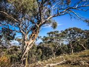 16th Apr 2019 - Tree