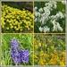 Spring Flower Collage
