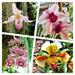 Orchids!  by bigmxx