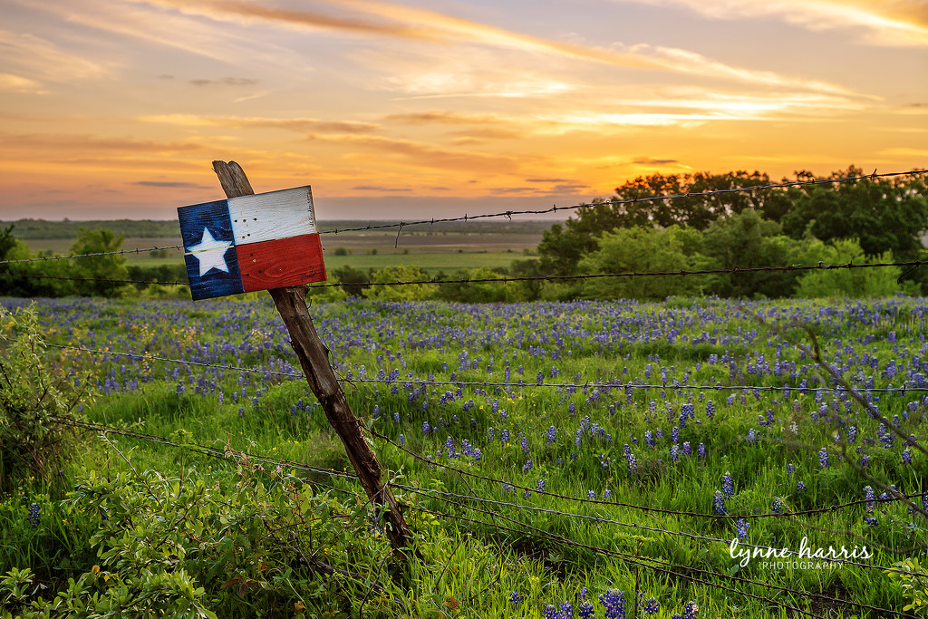 Good Morning, Texas! by lynne5477