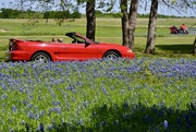16th Apr 2019 - If I had a new red Mustang and a red motorcycle, I would show them off in my ranch's Bluebonnet field too!
