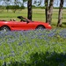 If I had a new red Mustang and a red motorcycle, I would show them off in my ranch's Bluebonnet field too!