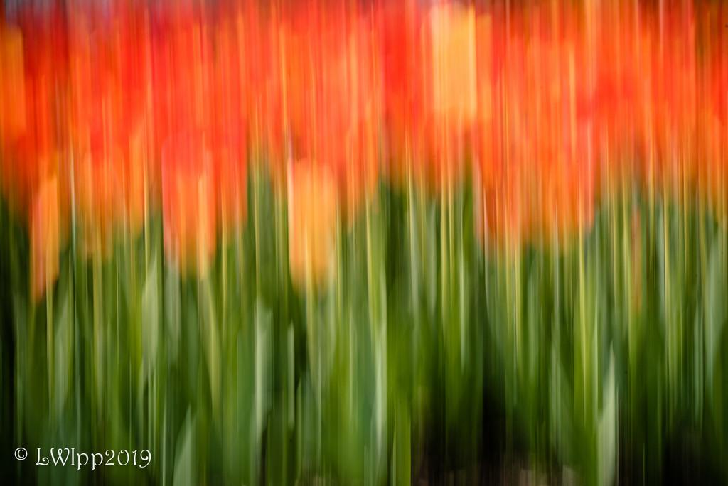 Orange U Pretty  by lesip