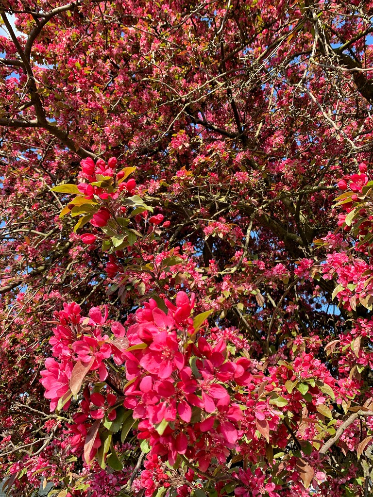 Spring in London.  by cocobella
