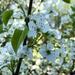 More Blosssoms
