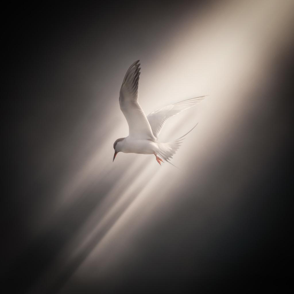 Kite In Flight by mikegifford