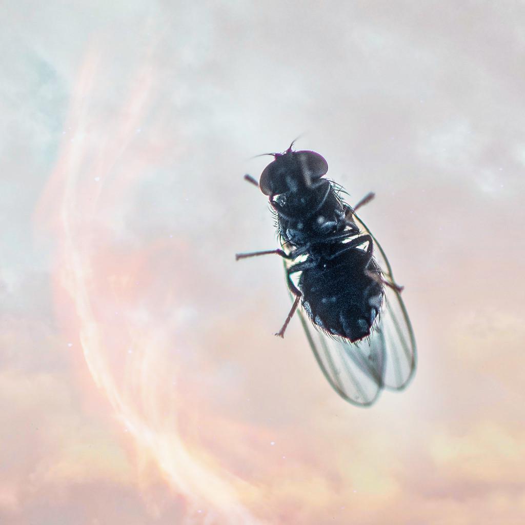Fly Peeks In by taffy