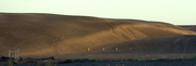 17th Apr 2019 - The dunes