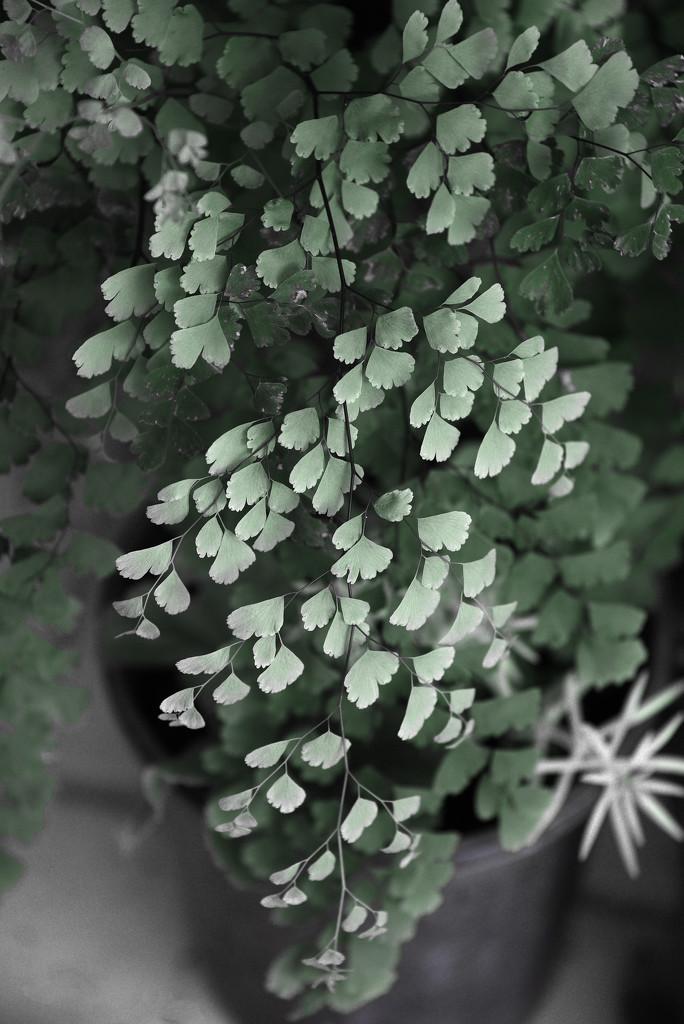 fern  by fr1da