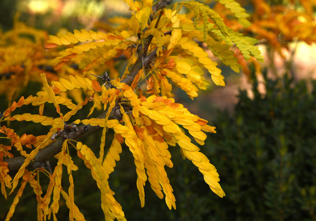yellow leaves  by fr1da