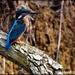 Look at my dear friend Bluey by rosiekind