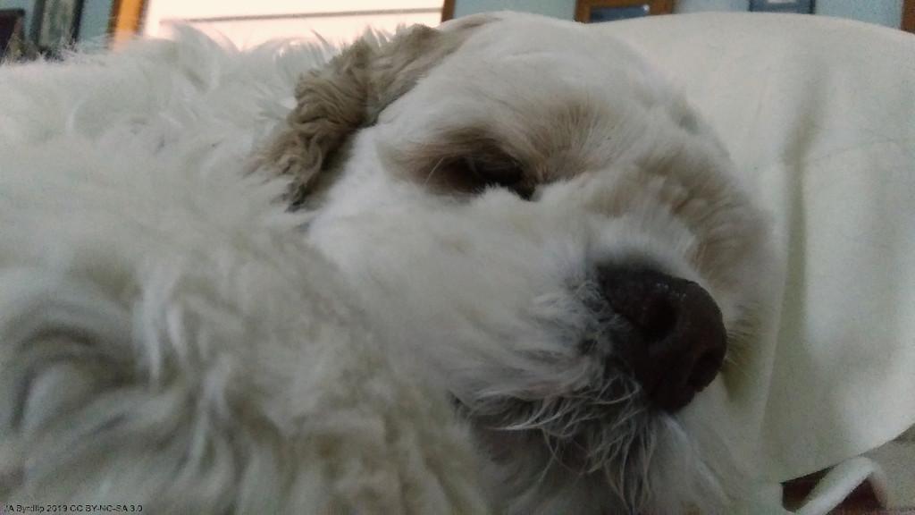 Barking Makes Me Tired by byrdlip