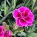 Beautiful Pink by shutterbug49