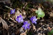 17th Apr 2019 - Spring flowers